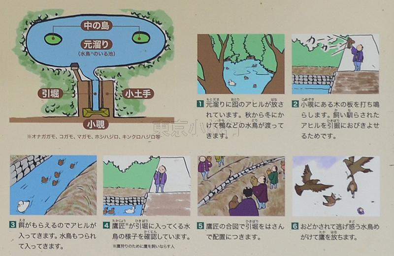 浜離宮恩賜公園、鴨猟の方法