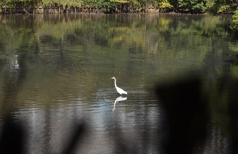 浜離宮恩賜公園、鴨場の覗き穴