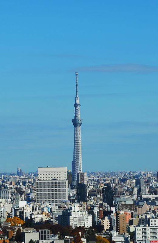 文京区シビックセンター(区役所)から東京スカイツリー