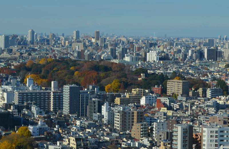 文京区シビックセンター(区役所)から小石川植物園