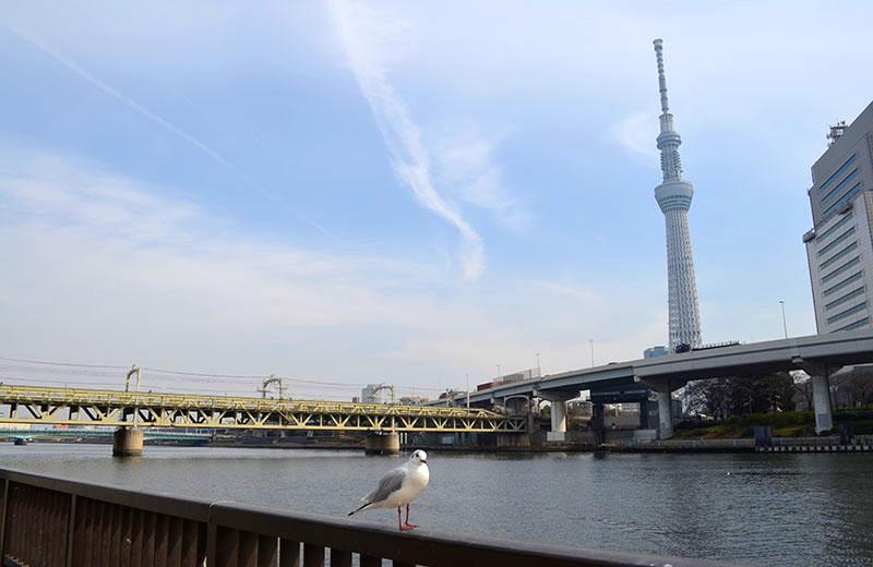 隅田公園:川沿いに歩き、違う角度からも見られます