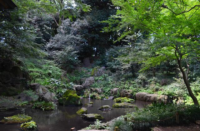 六義園の滝見茶屋から、川のせせらぎを見る
