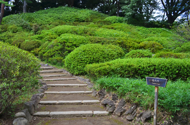 六義園。藤代峠への急階段
