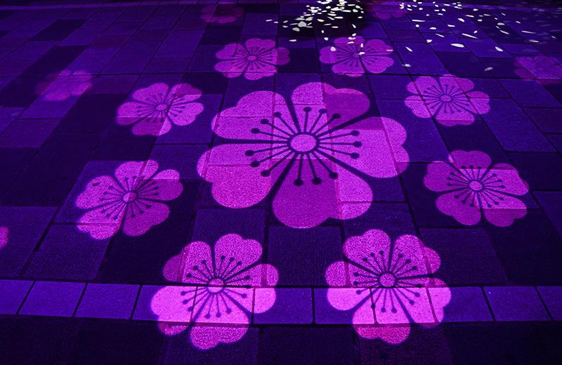 日本橋 桜フェスティバルの「サクラカーペット」を見に行こう!