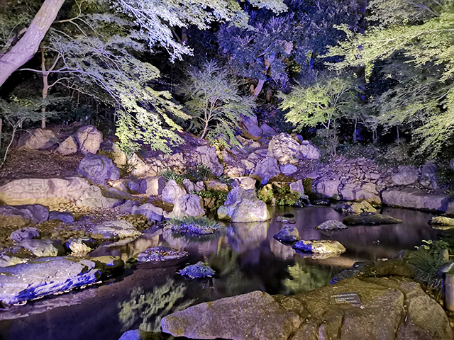 滝見の茶屋/六義園ライトアップ