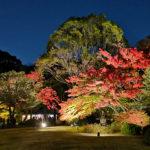 紅葉/六義園ライトアップ