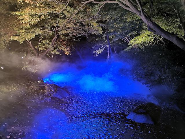 水香江(すいこうのえ)/六義園ライトアップ