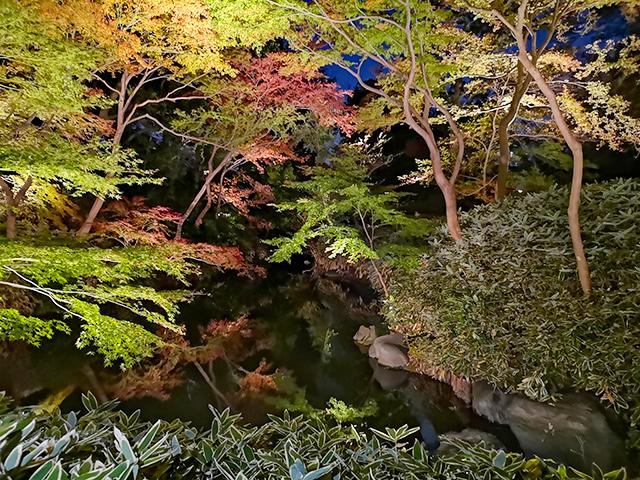 剡渓流(ぜんけいのながれ)/六義園ライトアップ