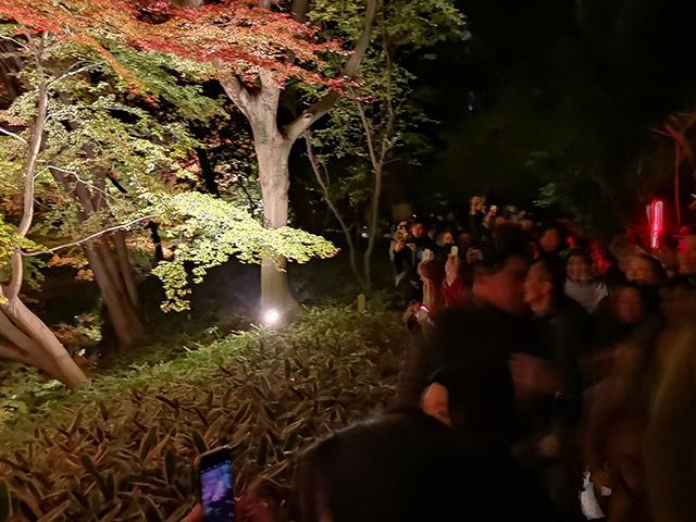 撮影街の行列/六義園ライトアップ